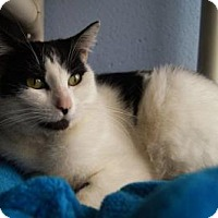 Adopt A Pet :: Bevin - New Milford, CT