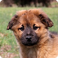 Adopt A Pet :: Lexie - Glastonbury, CT