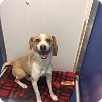 Adopt A Pet :: Sullivan - Nashville, TN