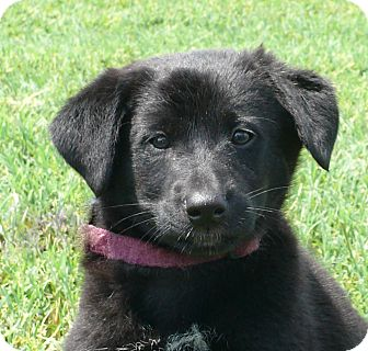 Puppy Adopt Adopt A Puppy Near You | Dog Breeds Picture