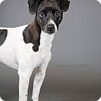 Adopt A Pet :: Niles - Muskegon, MI
