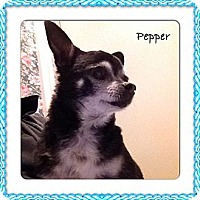 Adopt A Pet :: Pepper - Sheridan, OR