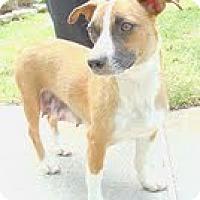 Adopt A Pet :: Maddie - Staunton, VA