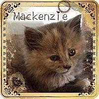 Adopt A Pet :: Mackenzie - Beverly Hills, CA