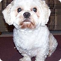 Adopt A Pet :: Fluffy-NJ - Mays Landing, NJ