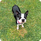 Adopt A Pet :: Mandy is a happy girl!