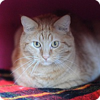 Adopt A Pet :: Cheddar - Topeka, KS