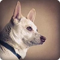 Adopt A Pet :: Coco - Carlisle, TN