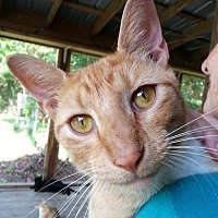 Adopt A Pet :: Morrisey - Freeport, FL