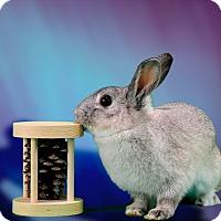 Adopt A Pet :: Elsa Bradshaw - Marietta, GA