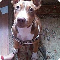Adopt A Pet :: Hutch - Whitestone, NY