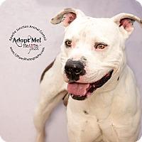 Adopt A Pet :: Butch - Apache Junction, AZ