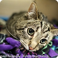 Adopt A Pet :: Miley *Foster* - Appleton, WI