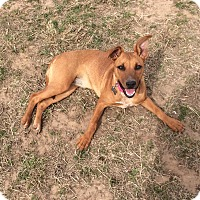 Adopt A Pet :: Lola - Woodward, OK