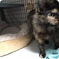 Adopt A Pet :: Cinnamon - Diamond Springs, CA