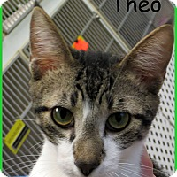 Adopt A Pet :: Theo - Warren, PA