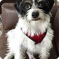 Adopt A Pet :: Gibson D4134 - Fremont, CA