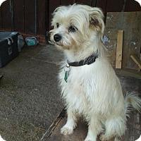 Terrier (Unknown Type, Medium) Mix Dog for adoption in Eastman, Georgia - Jax