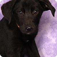 Adopt A Pet :: Martin BC - St. Louis, MO