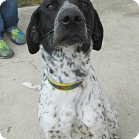 Adopt A Pet :: Bishop - Lake Odessa, MI