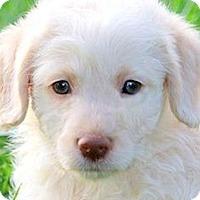 Adopt A Pet :: POLO(OUR