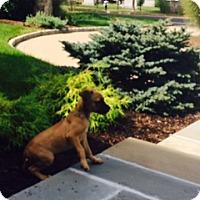 Adopt A Pet :: Sebastian - Rowayton, CT