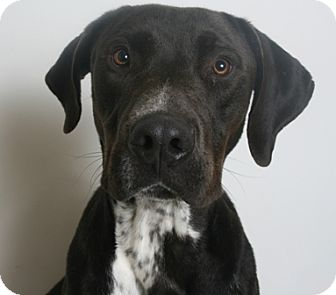 Hound (Unknown Type) Mix Dog for adoption in Redding, California - Daylyn