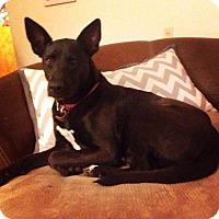 Adopt A Pet :: Dina - Bonner Springs, KS