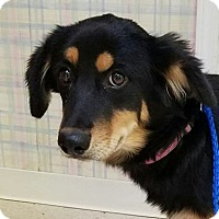 Adopt A Pet :: Marnie - Denver, CO