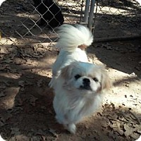 Adopt A Pet :: Popcorn - Thorndale, TX