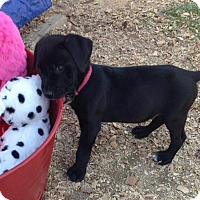 Adopt A Pet :: MAX-APPLICATION PENDING - Cranston, RI