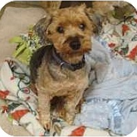 Adopt A Pet :: Xander - Madison, WI