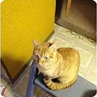 Adopt A Pet :: Sam - Saint Albans, WV