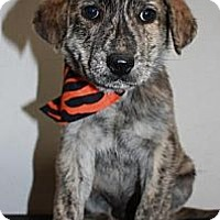 Adopt A Pet :: Jeff - Stilwell, OK