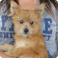 Adopt A Pet :: Paul - Salem, NH