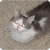 Adopt A Pet :: Frenchie - Davis, CA