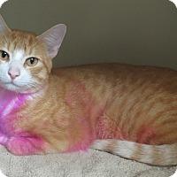 Adopt A Pet :: Teddy - Brockton, MA