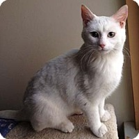 Adopt A Pet :: Sweet Pea - Merrifield, VA