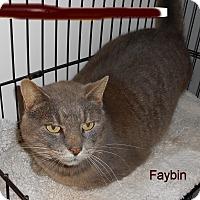 Adopt A Pet :: Faybin - Fairborn, OH