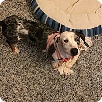 Adopt A Pet :: China - Marcellus, MI