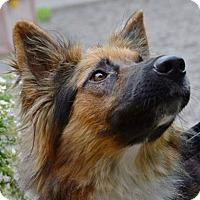 Adopt A Pet :: Kassidy - Rochester/Buffalo, NY