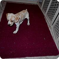 Adopt A Pet :: Landon -Adopted! - Kannapolis, NC