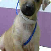 Adopt A Pet :: Camron - Fort Collins, CO