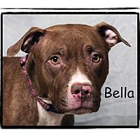 Adopt A Pet :: Bella - Warren, PA