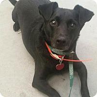 Adopt A Pet :: Diogi - Orlando, FL