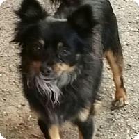 Adopt A Pet :: LB - Gustine, CA