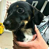 Adopt A Pet :: Beatrice - Kimberton, PA