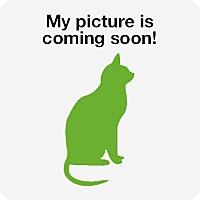 Adopt A Pet :: A Shelter Cat/Kitten - Rustburg, VA