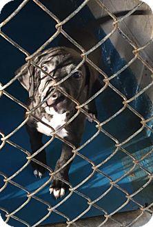 Labrador Retriever Mix Puppy for adoption in Waycross, Georgia - Deare