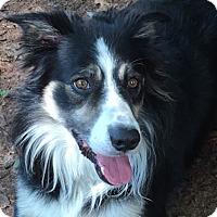 Adopt A Pet :: Zeke - All Cities, SC